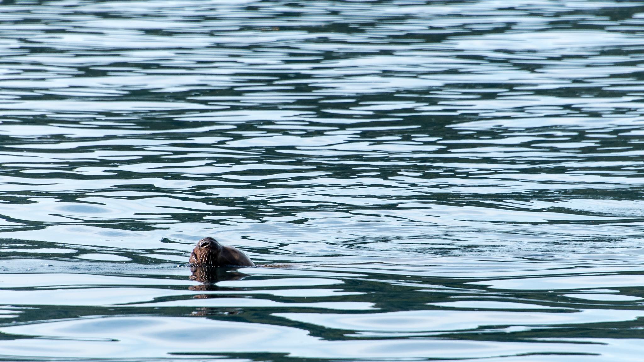 2017-08-10 - Juneau Photo Safari - 096