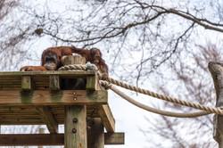 2017-03-11 - Zoo Atlanta - 037