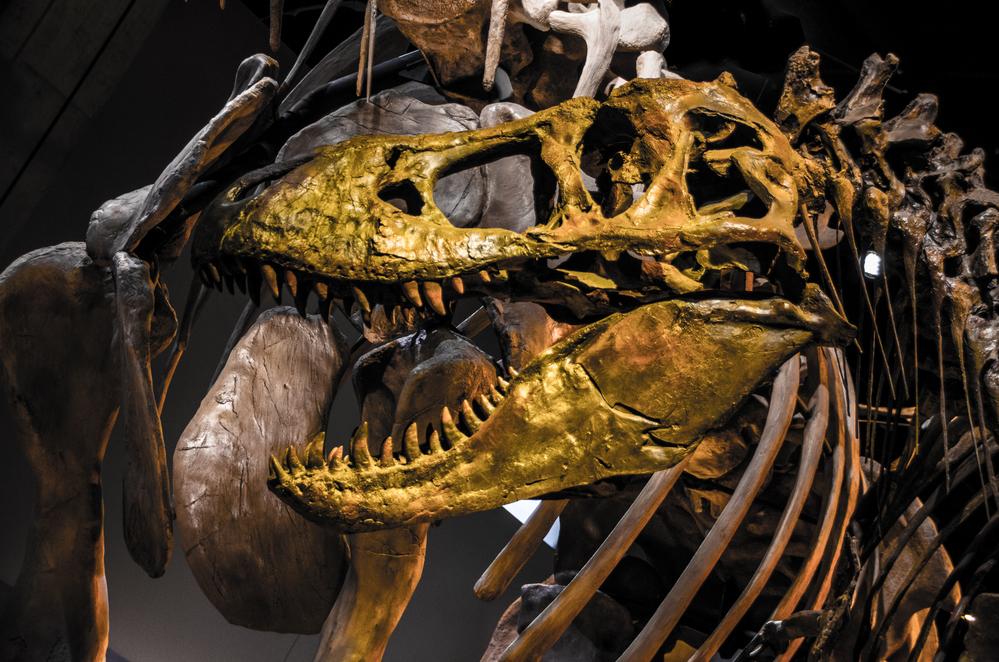 2015-02-09 - American Roadtrip Day 3 - Perot Museum Of Natural History - 045