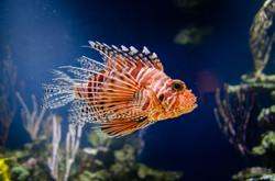2015-03-25 - Monterrey Bay Aquarium - 165