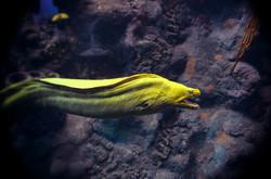 2013-07-28 - The Florida Aquarium - 047