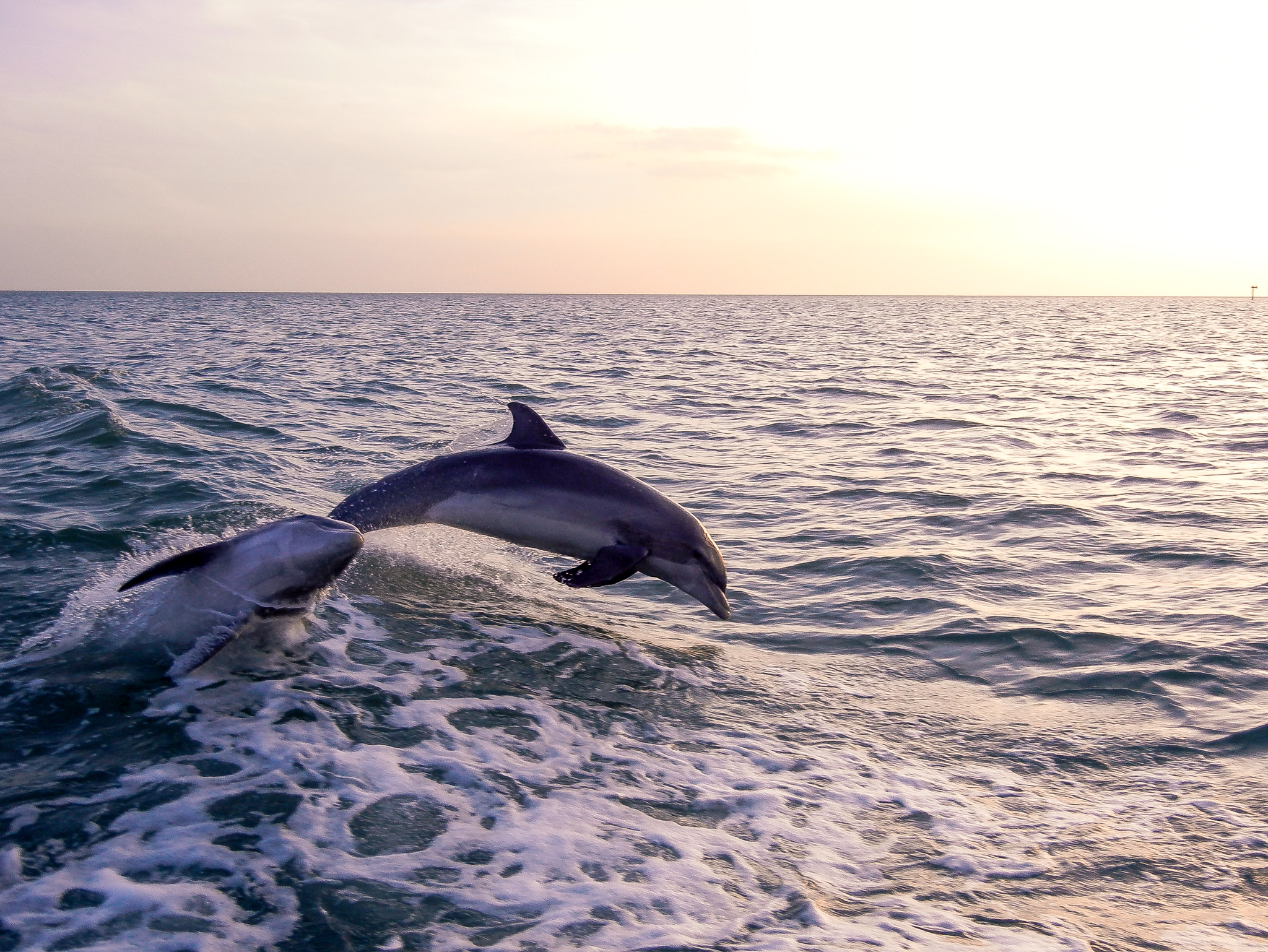 2011-03-02 - Clearwater Dolphin Sightings - 054