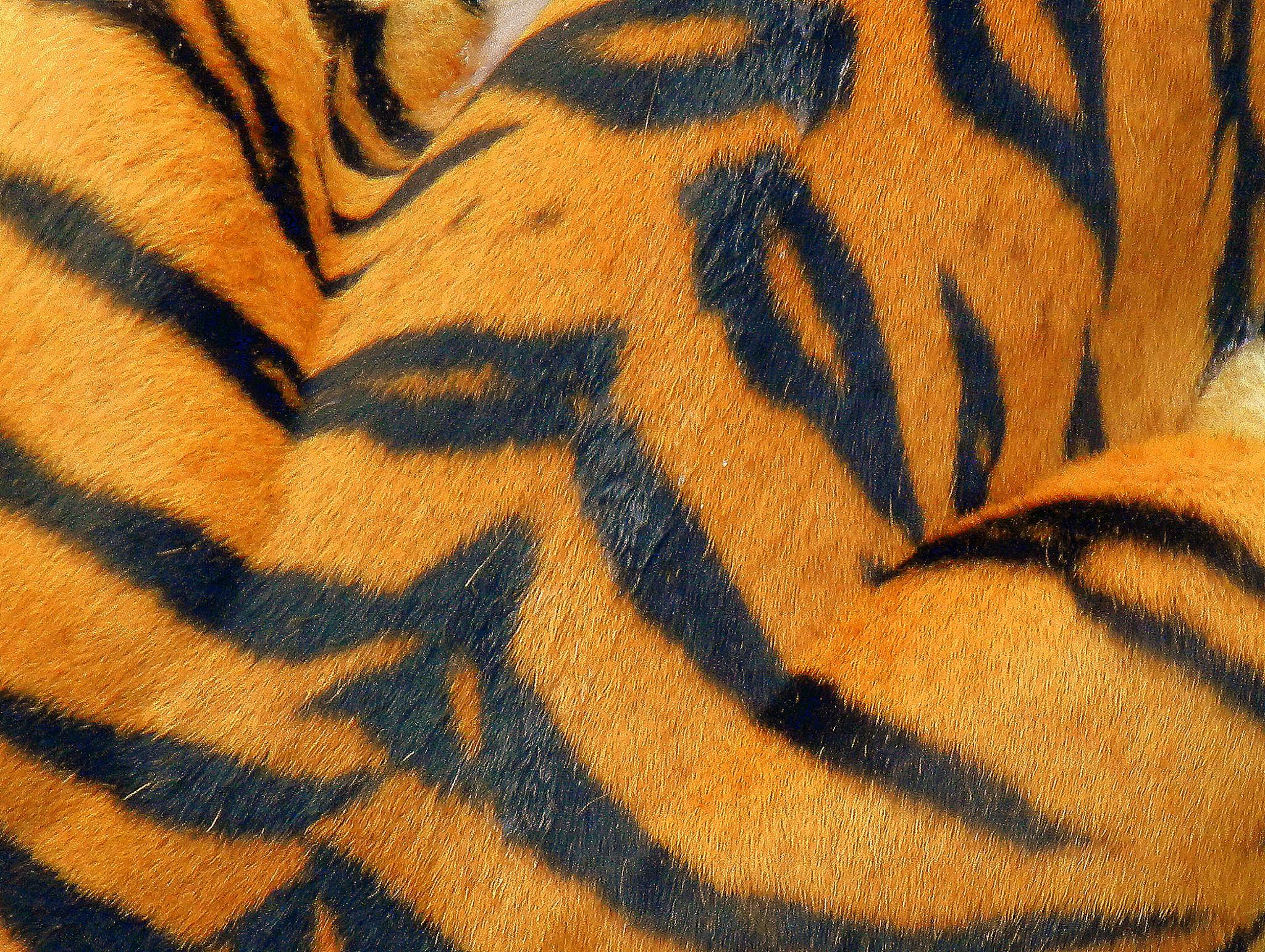 2011-08-02 - Busch Gardens - 031