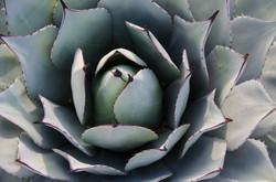 2015-02-14 - Desert Botanical Gardens - 010