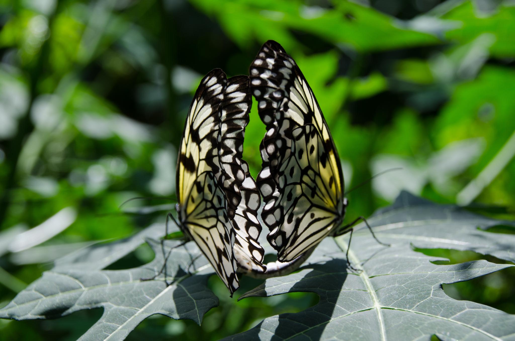 2014-08-24 - Butterfly World - 052