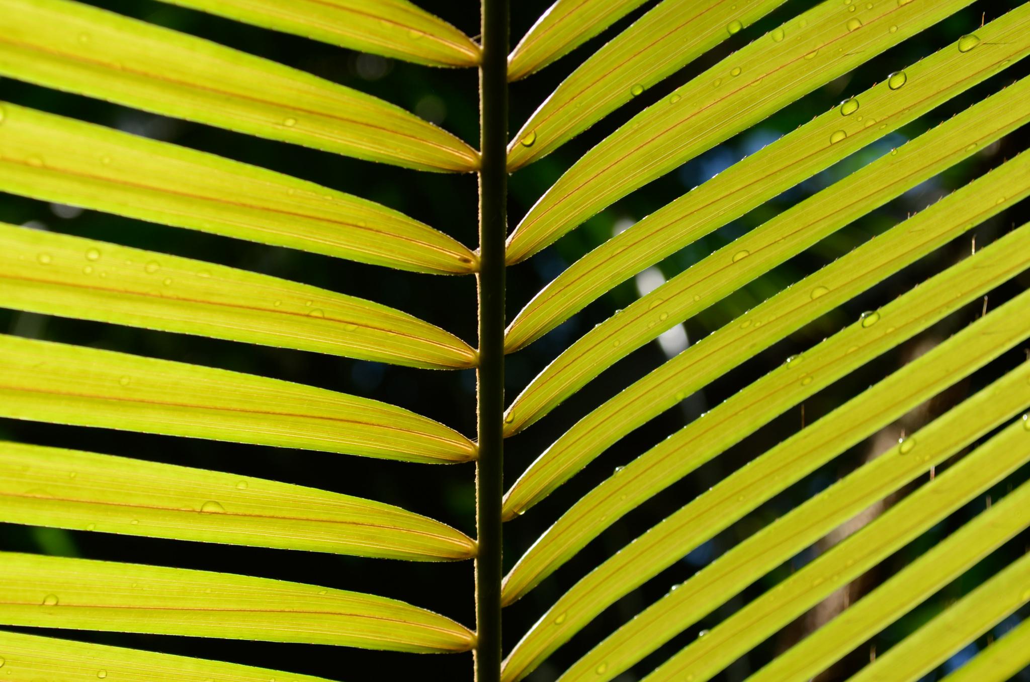 2011-10-16 - Atlanta Botanical Gardens - 047