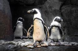2012-08-25 - Georgia Aquarium - 043