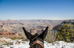 2015-03-07 - Grand Canyon Mule Ride - 063