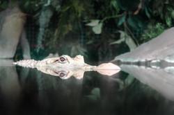 2017-04-23 - The Georgia Aquarium - 054