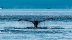 2017-08-10 - Juneau Photo Safari - 075