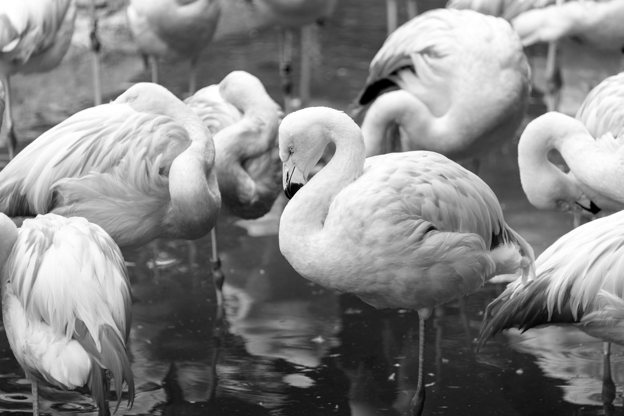 2017-03-11 - Zoo Atlanta - 090