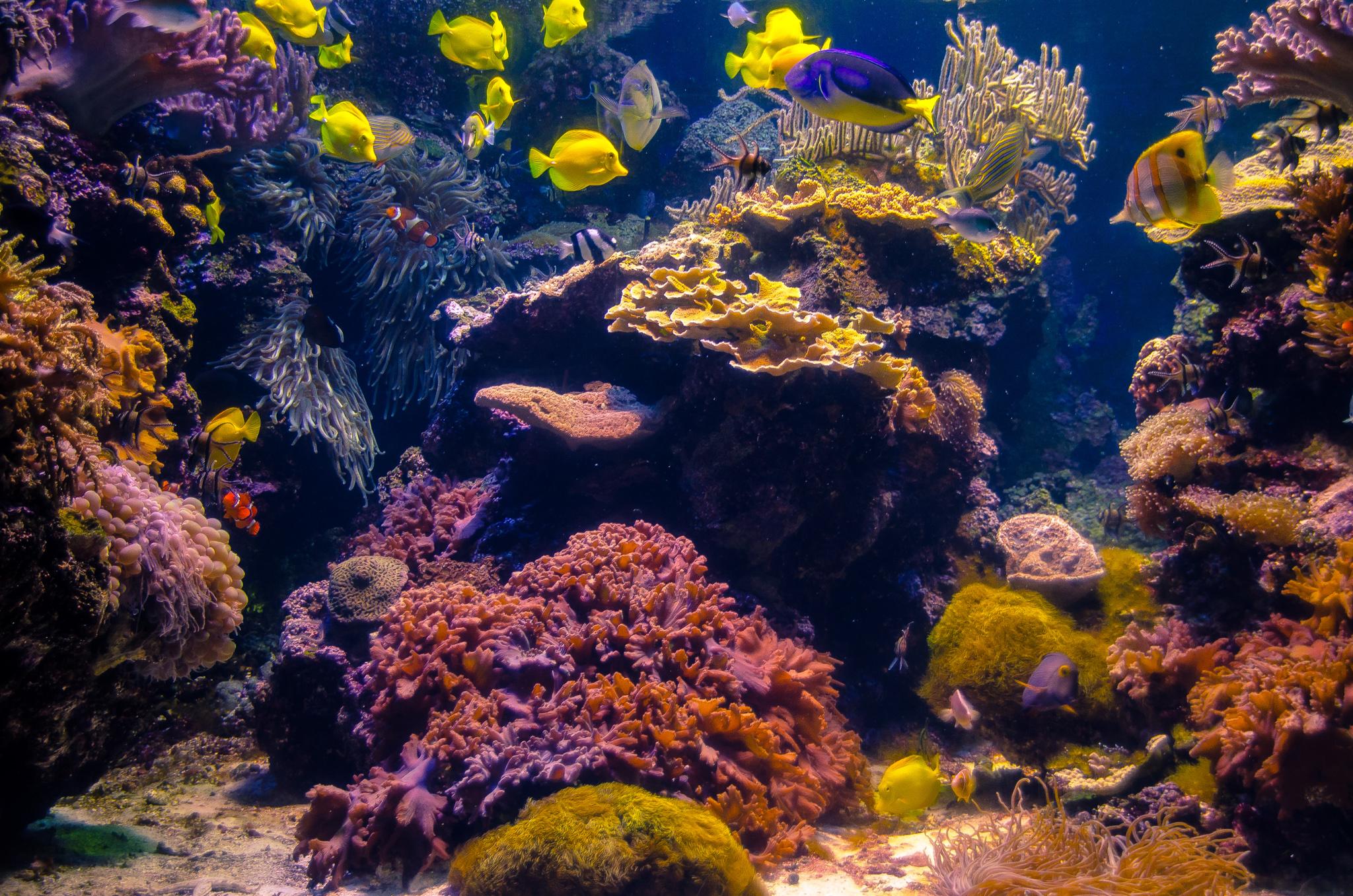 2016-03-07 - The National Aquarium - 053