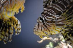 2015-03-25 - Monterrey Bay Aquarium - 163