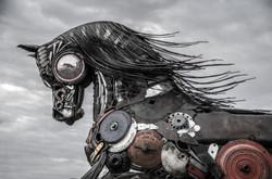 2015-02-15 - Scottsdale Arabian Horse Show - 005