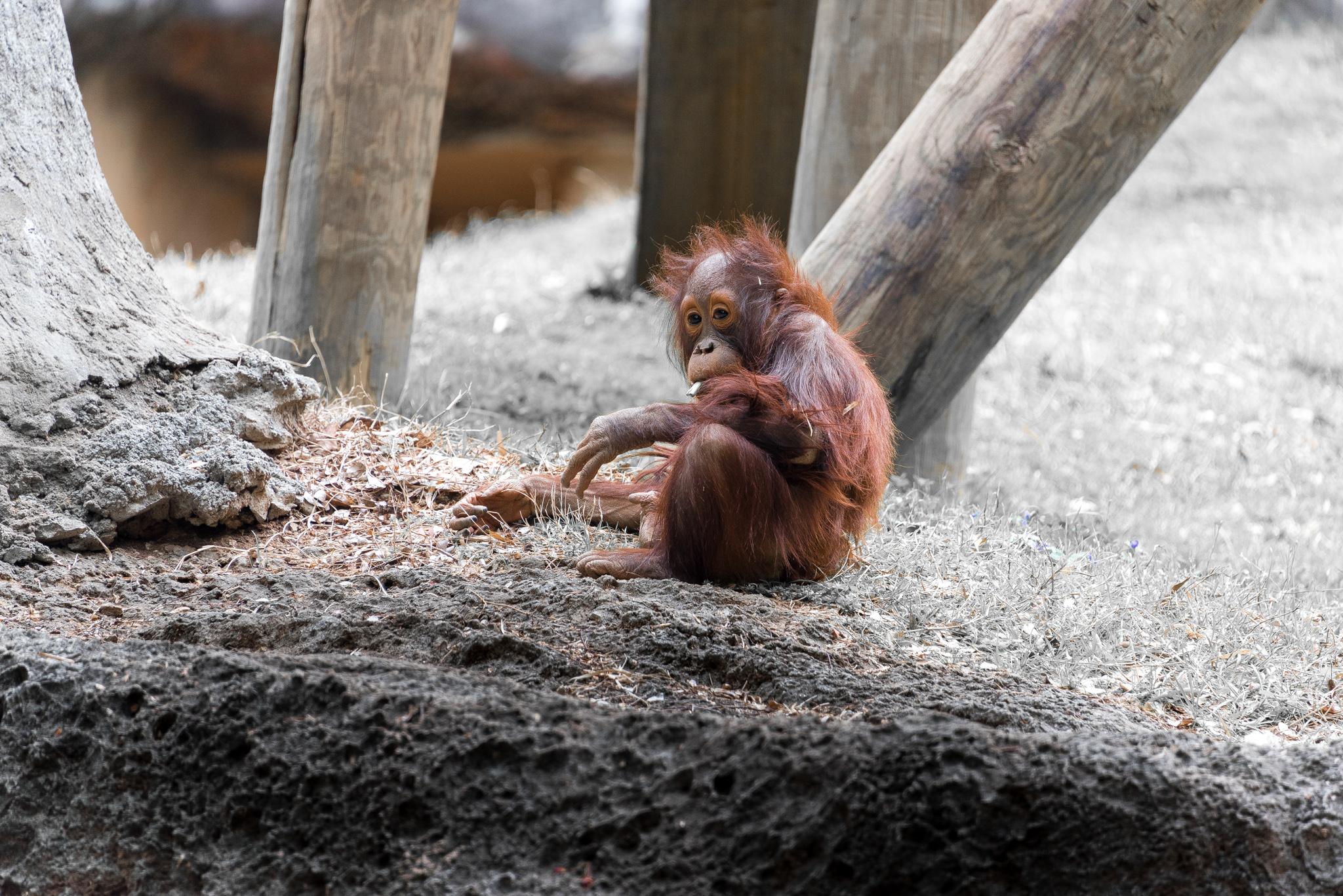 2017-03-11 - Zoo Atlanta - 040