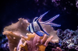2016-03-07 - The National Aquarium - 058