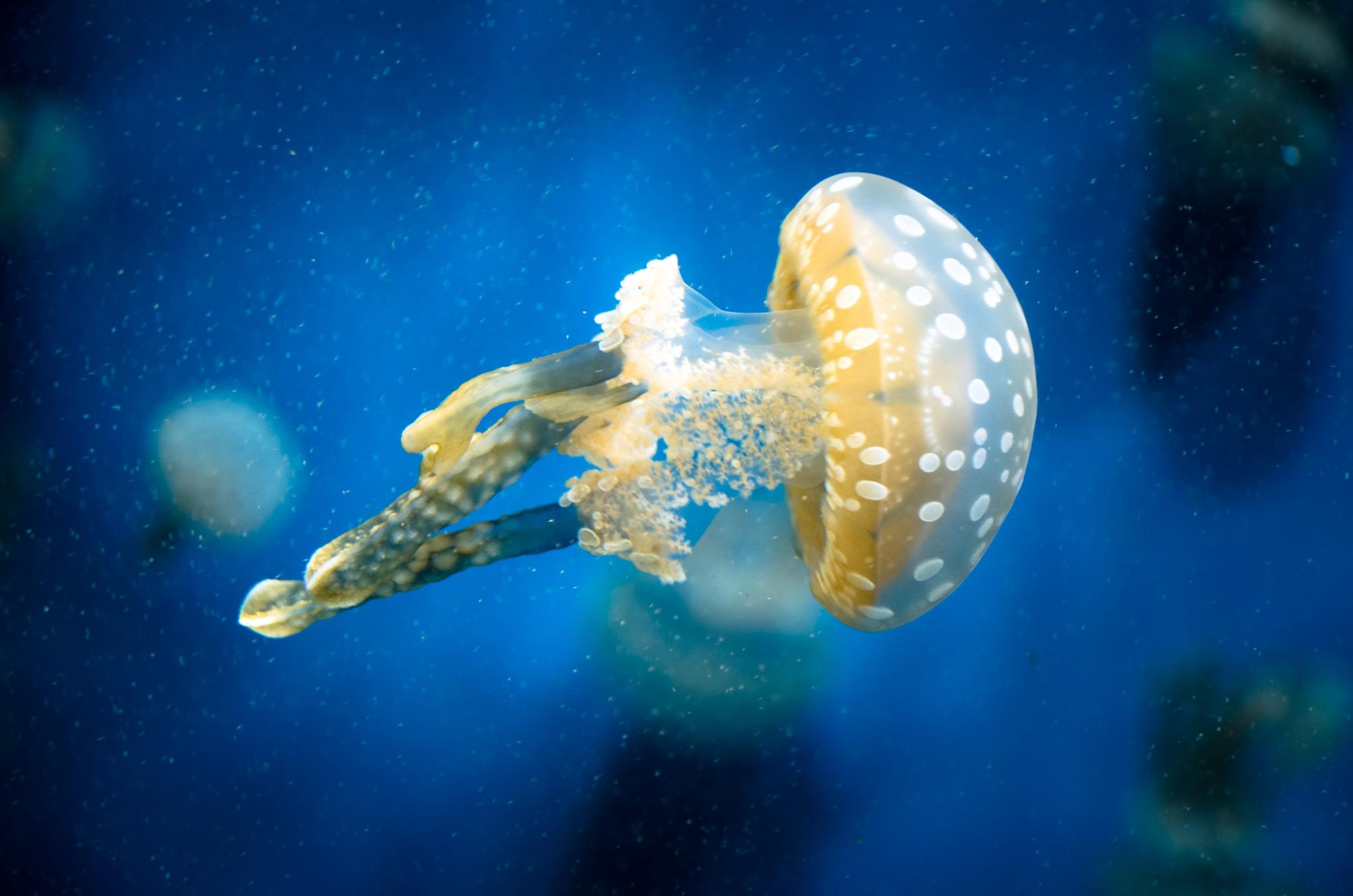 2015-03-25 - Monterrey Bay Aquarium - 193