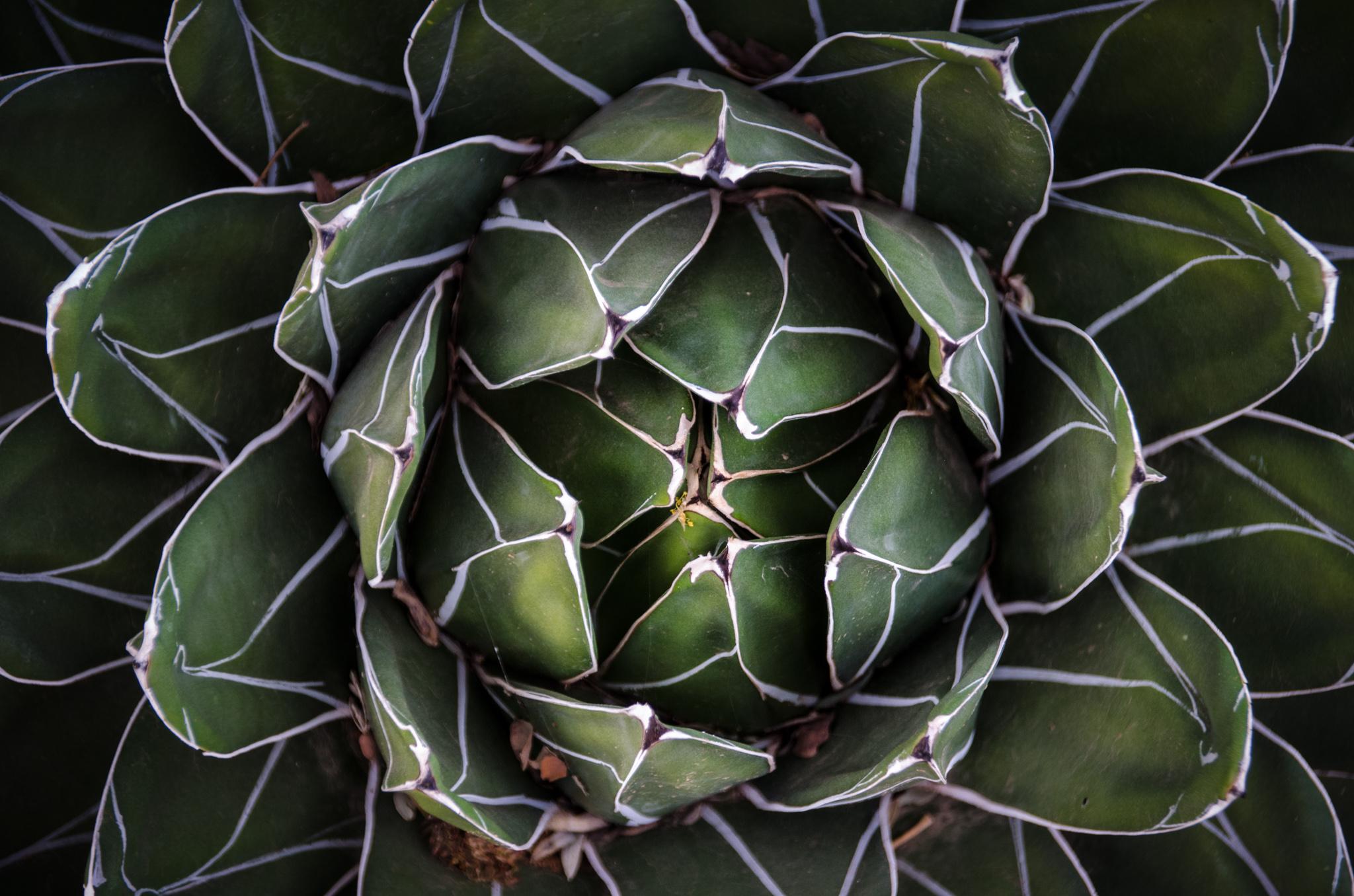 2015-02-14 - Desert Botanical Gardens - 069