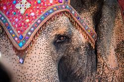2016-07-08 - Kanika Weds Bharat - 017