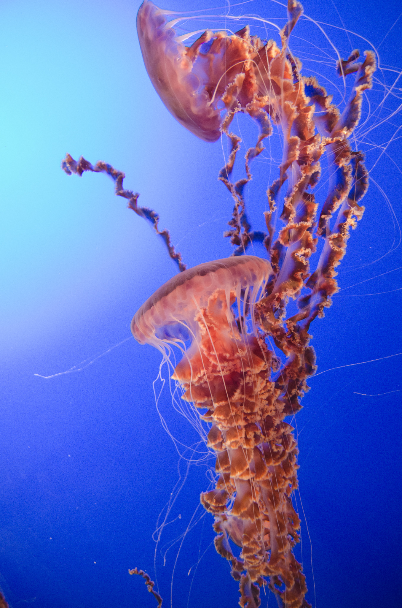 2015-03-25 - Monterrey Bay Aquarium - 115