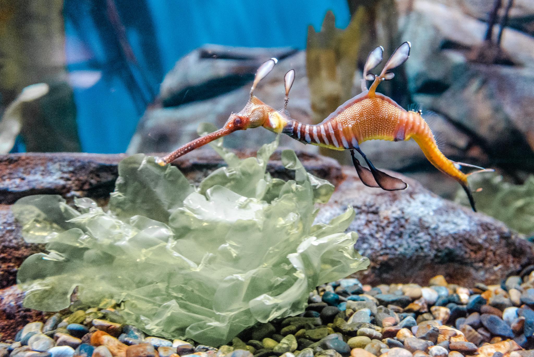 2017-04-23 - The Georgia Aquarium - 072