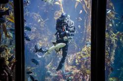 2015-03-25 - Monterrey Bay Aquarium - 028