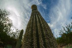 2015-02-14 - Desert Botanical Gardens - 031