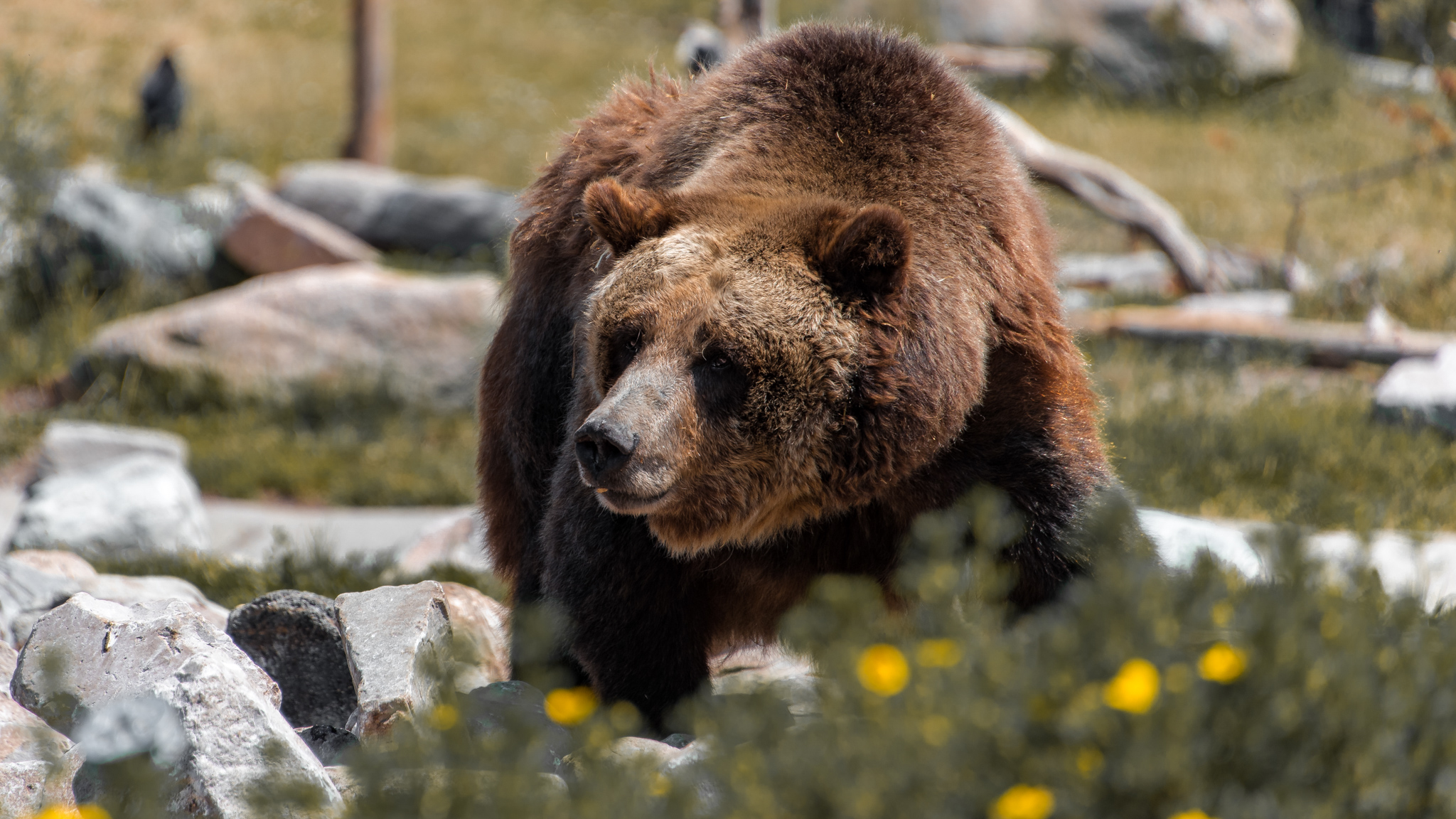 2017-07-07 - Grizzley Bear Conservatory - 056