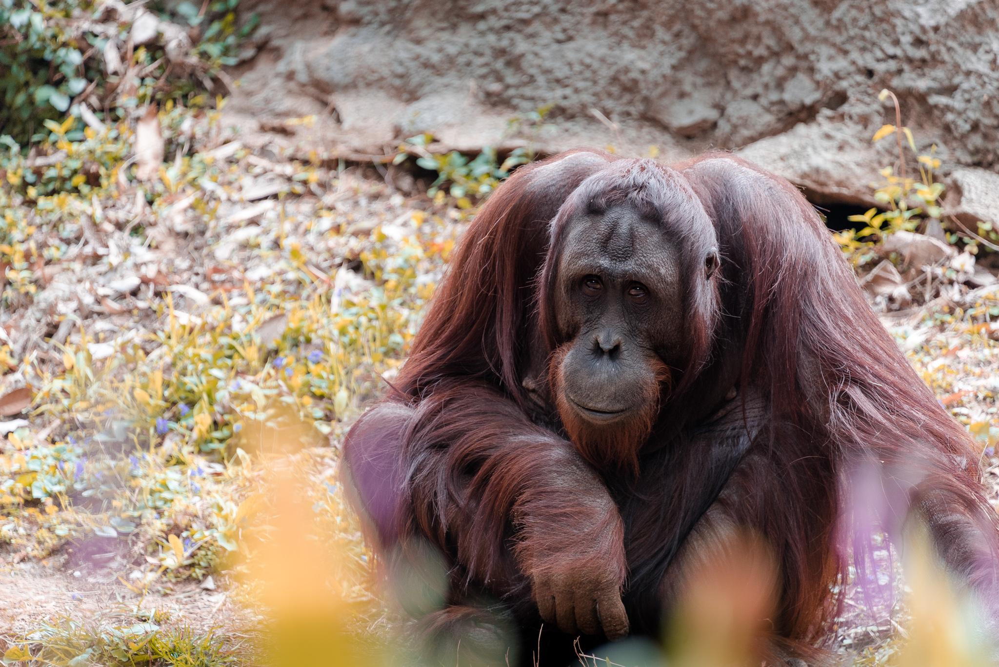 2017-03-11 - Zoo Atlanta - 042