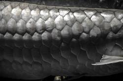 2016-03-07 - The National Aquarium - 081