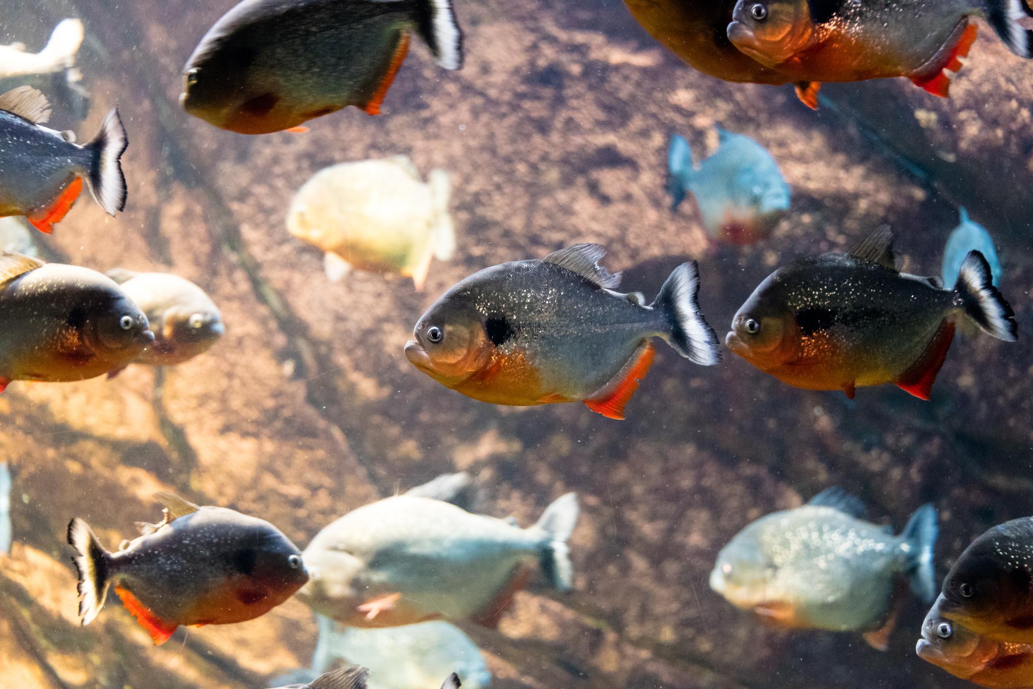2017-04-23 - The Georgia Aquarium - 057