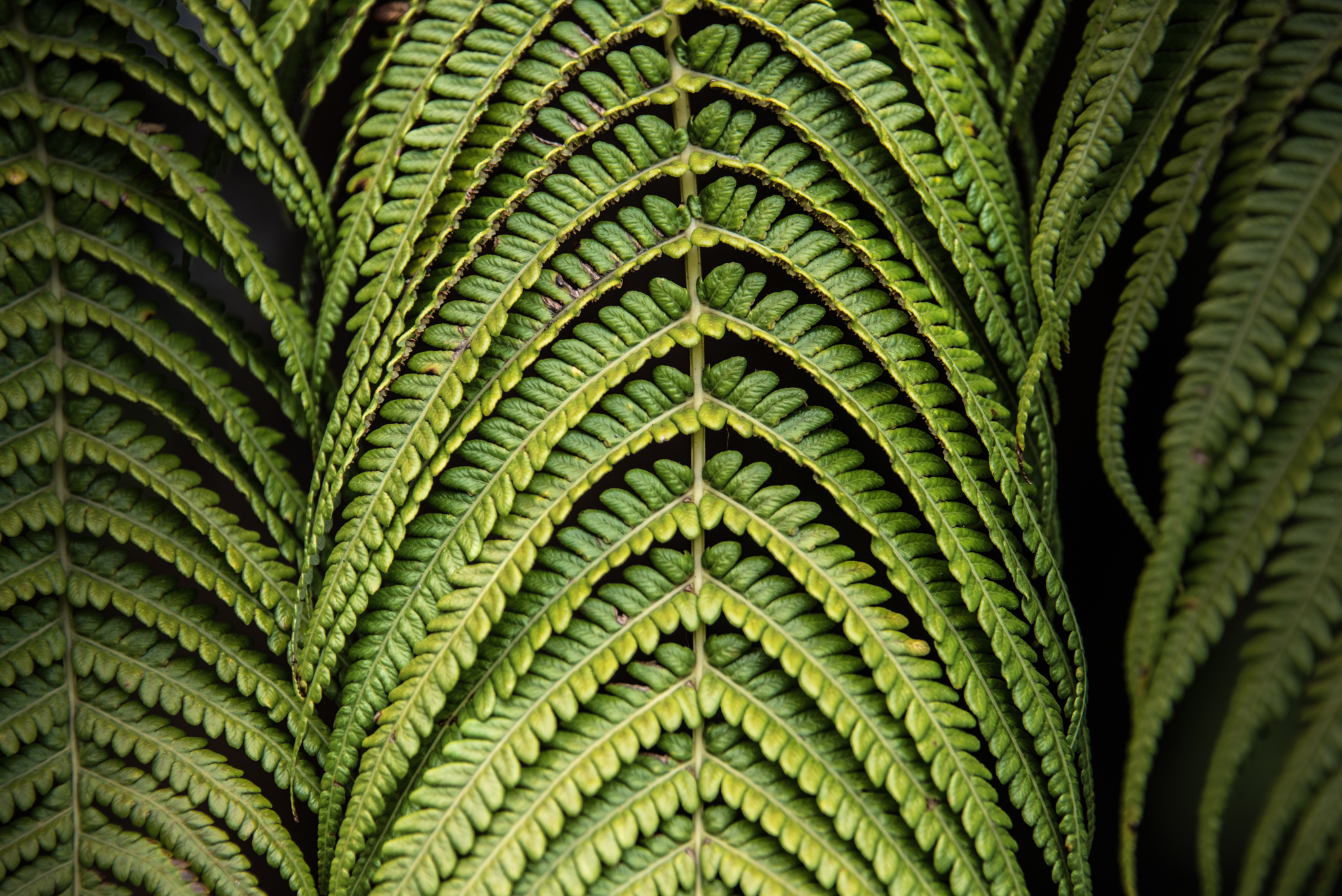 2016-06-02 - Fern Forest And Lava Tube - 003