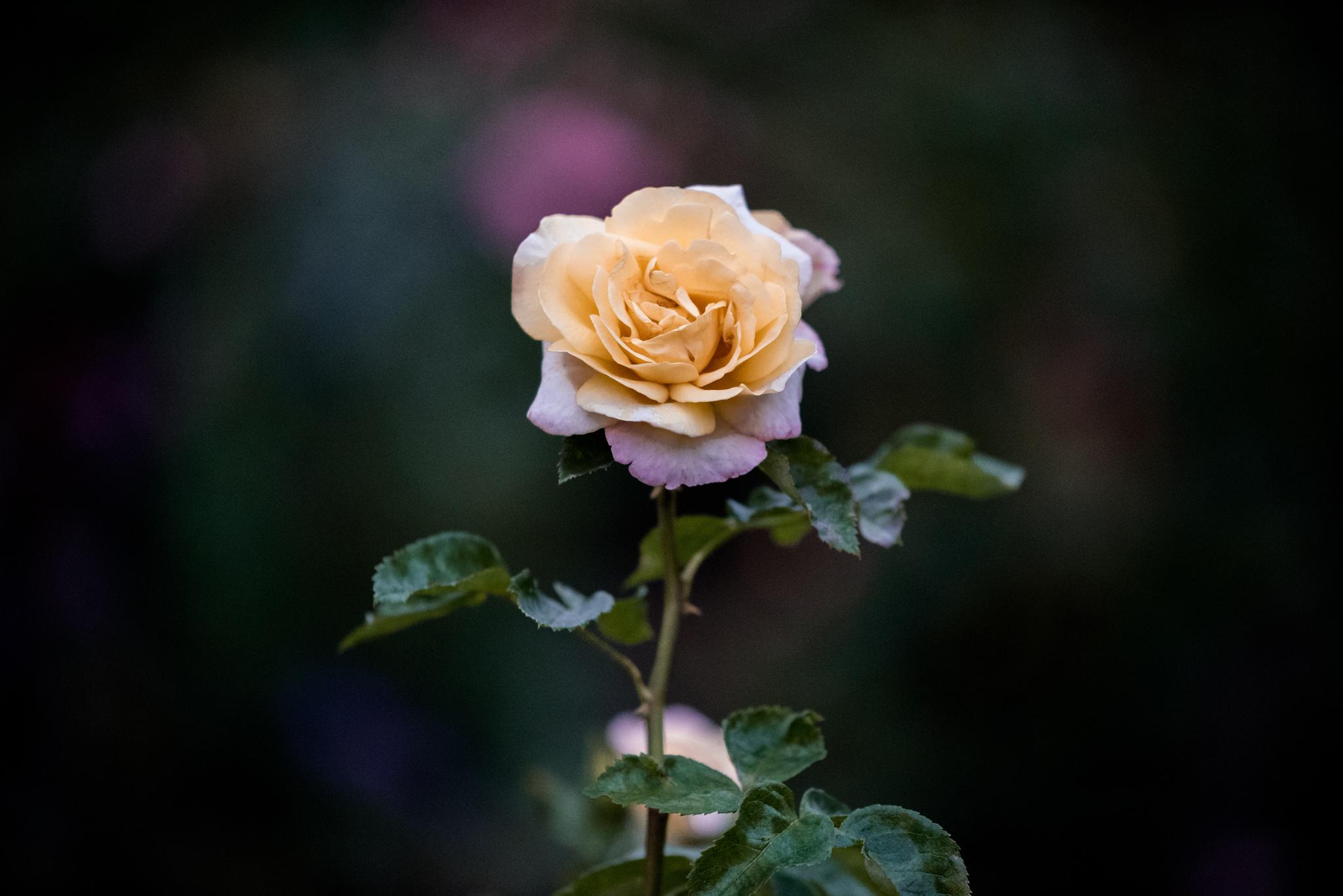 2017-08-05 - Butchart Gardens - 095