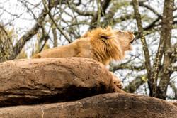 2017-03-11 - Zoo Atlanta - 075
