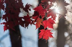 2016-10-29 - Exploring North Georgia Fall Colors - 069