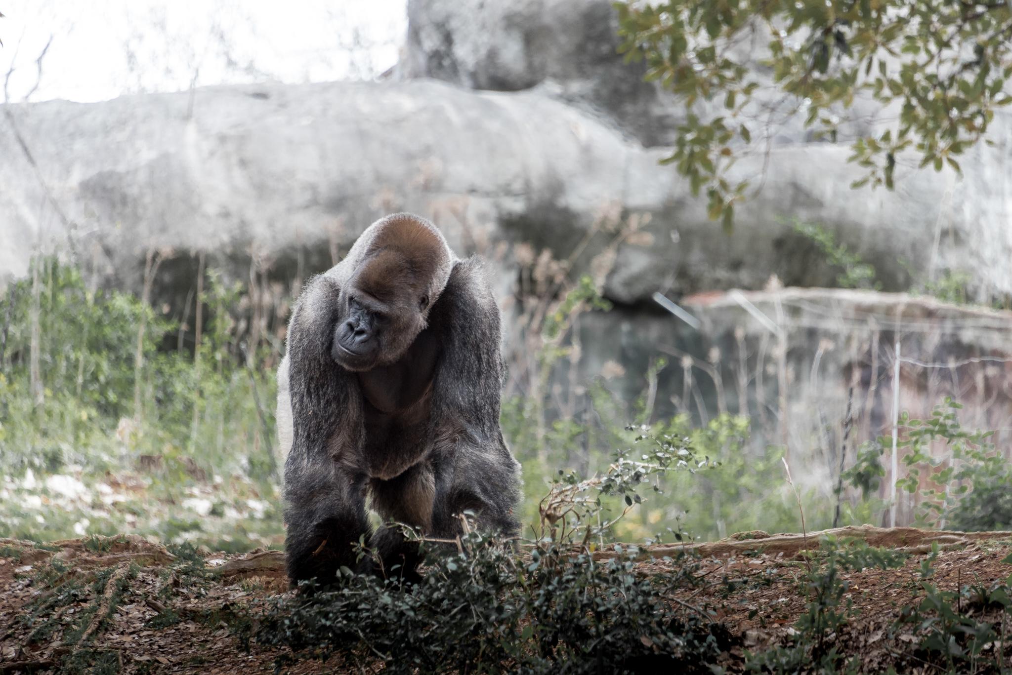 2017-03-11 - Zoo Atlanta - 050
