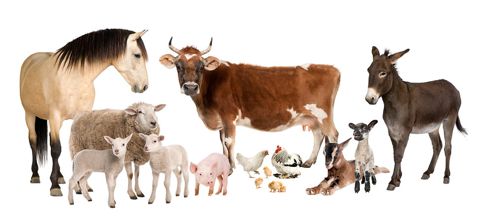 shutterstock_29357284FarmAnimals.jpg