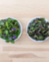 herbs-2437091_1920.jpg