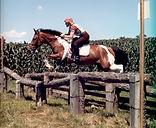 susannah hill horse.jpg