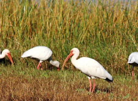 Summer Birding Tips: Finding the Birds & Beating the Heat