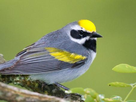 THE Spring Birding Hotspot on the Texas Gulf Coast