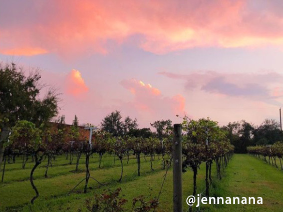 jennanana  Yepez Vineyard Photo