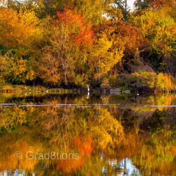 Reflection of Foliage