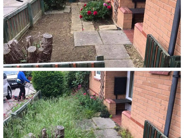 Front Garden tidy-up!