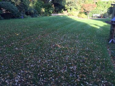 Leaf Clearing