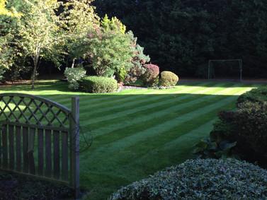 Autumn garden photo taken today in Milton Keynes.