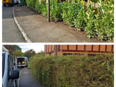 Front Hedge removal & replanting.