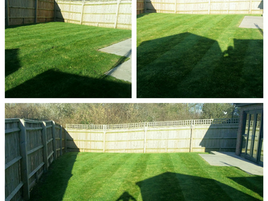 Garden Maintenance: February 2016 (2)