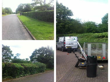 Commercial Factory Hedge Cut Back Tidy up