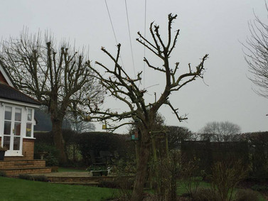 Additional Service: Winter Tree Pruning